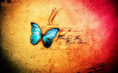 butterfly decal wallpaper
