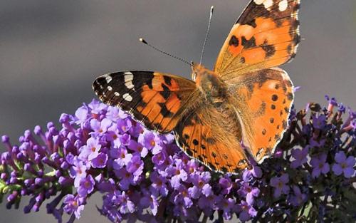 flower butterfly wallpaper