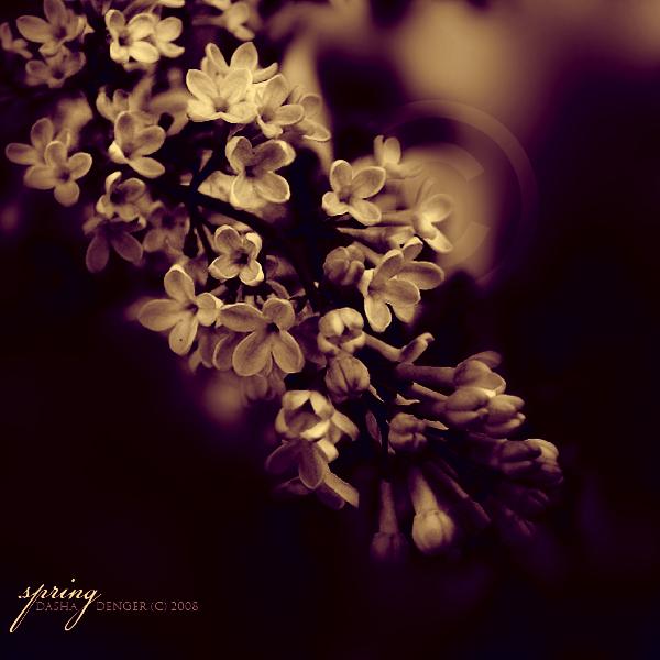 Last spring photo