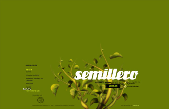 Green Website Design - Semillero