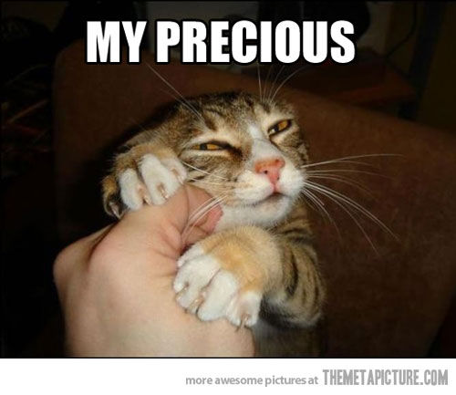 funny cat pictures with captions 1