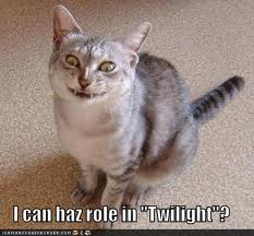 funny cat pictures with captions 12
