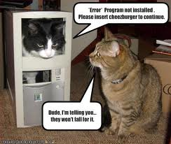 funny cat pictures with captions 14