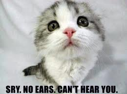 funny cat pictures with captions 16