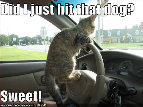 funny cat pictures with captions 2