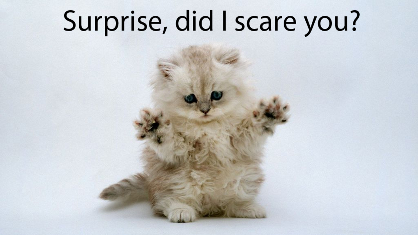 funny cat pictures with captions 20