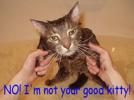 funny cat pictures with captions 21