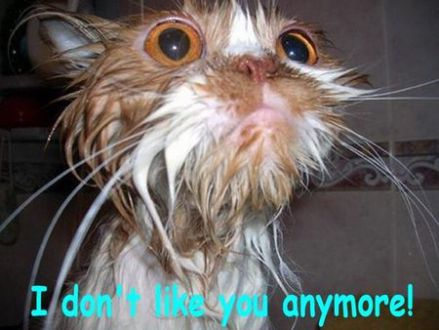 funny cat pictures with captions 22