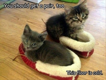 funny cat pictures with captions 23
