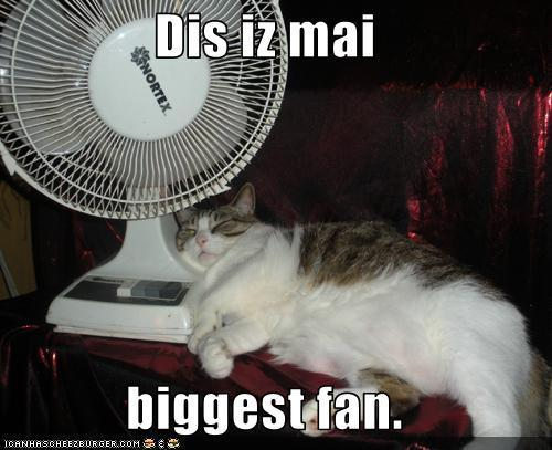 funny cat pictures with captions 5