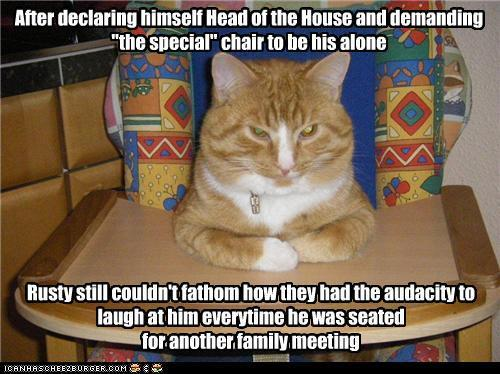 funny cat pictures with captions 6