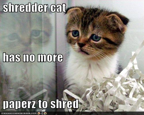 funny cat pictures with captions 9