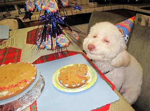 ffunny happy dog