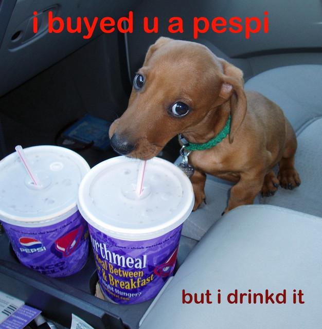 pepsi dog funny picture