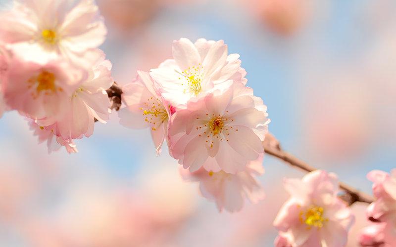 spring flowers wallpaper 1