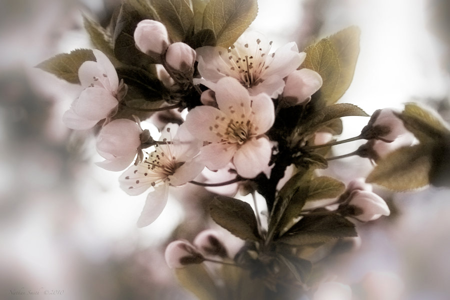 spring flowers wallpaper 5