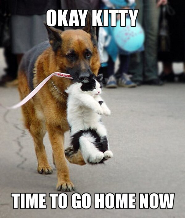 funny cats and dogs 5
