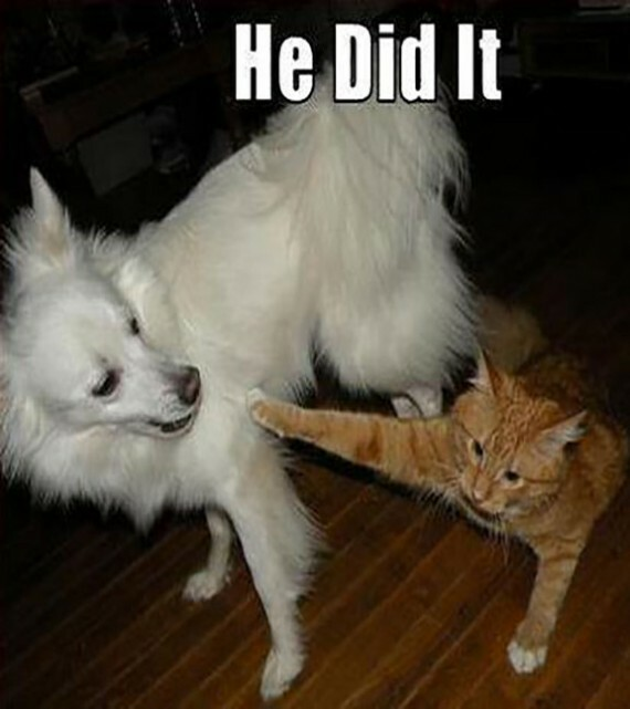 funny cats and dogs 16