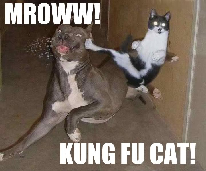 funny cats and dogs 6