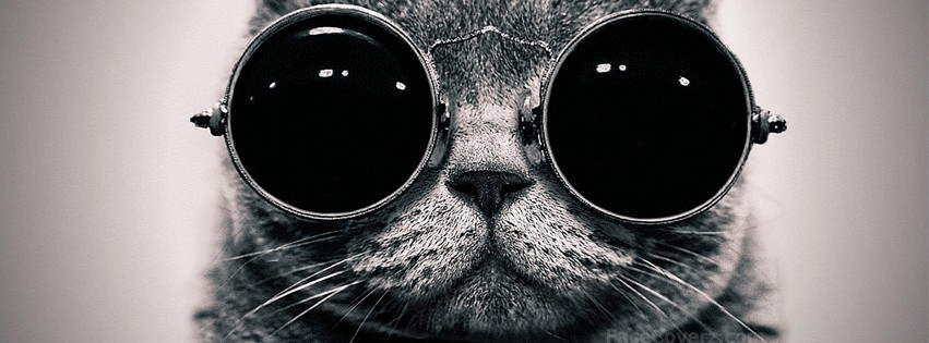 cool cat fb cover photo