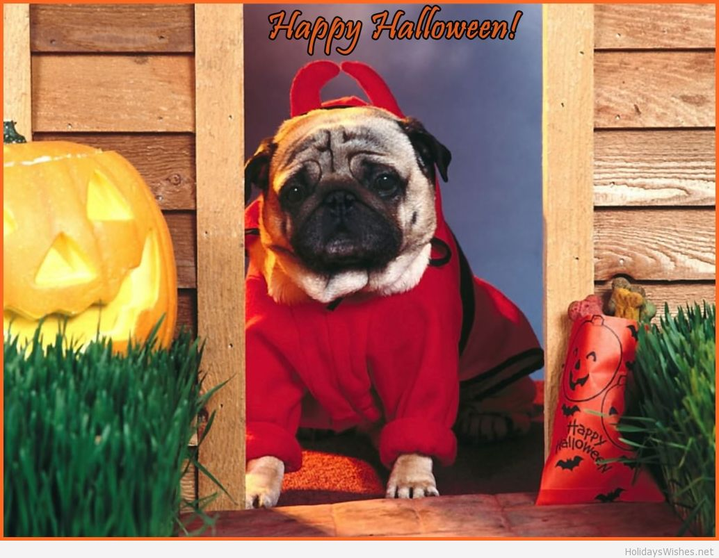 Happy-Halloween-Puppy-picture