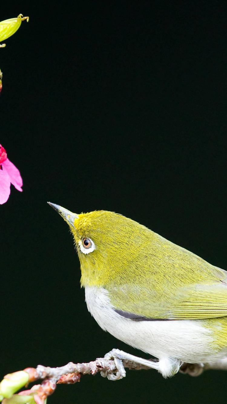 cute bird iphone 6 wallpaper