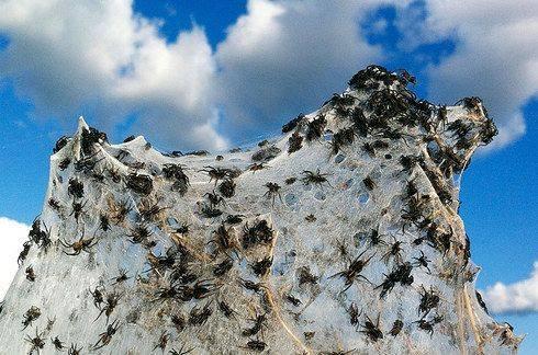 Surreal Spiderwebs