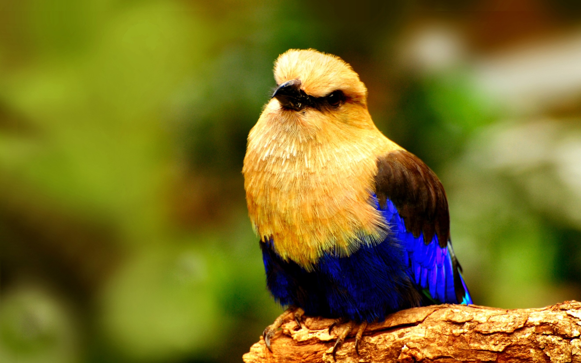 cute bird with amazing colors