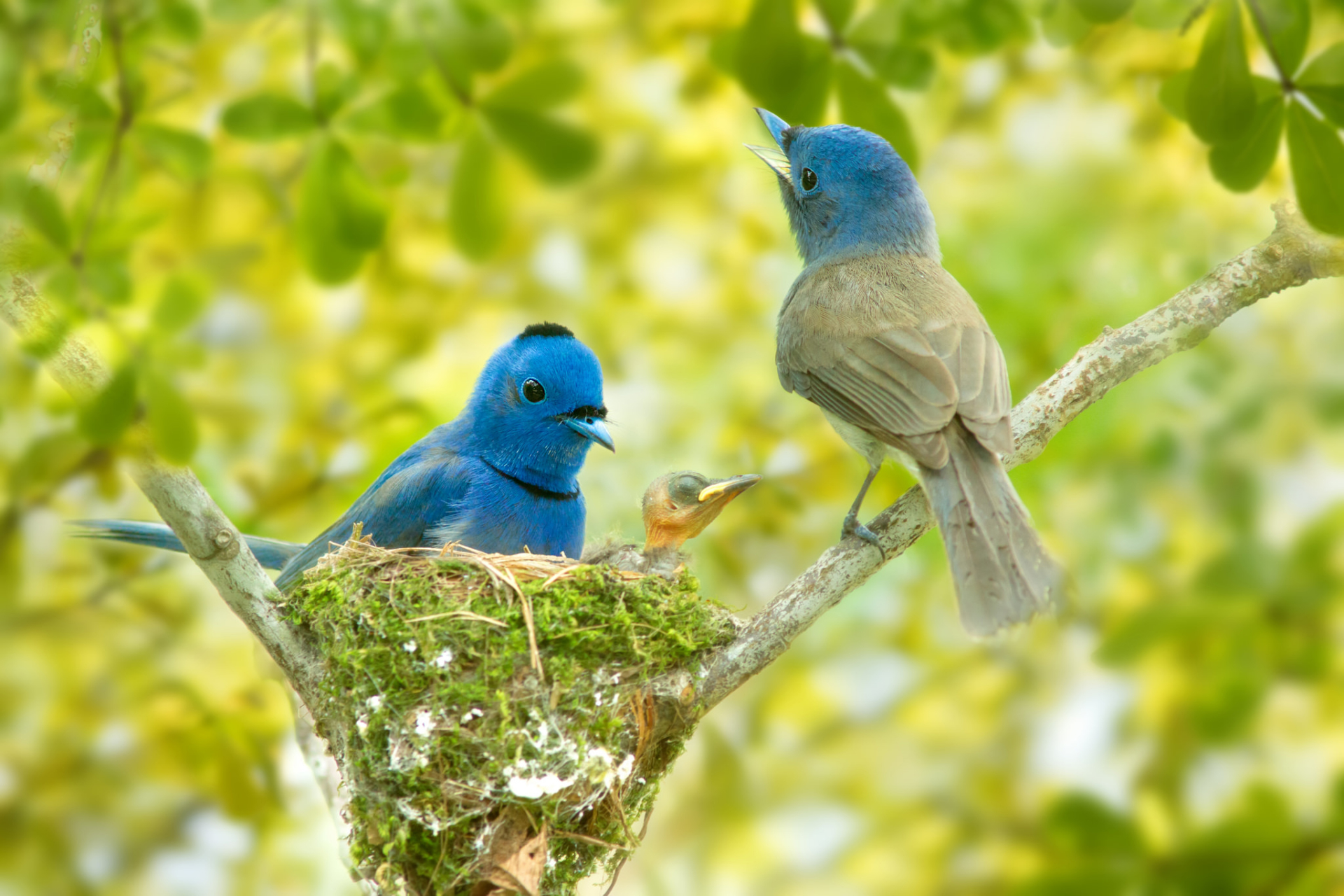 cute birds with really amazing colors