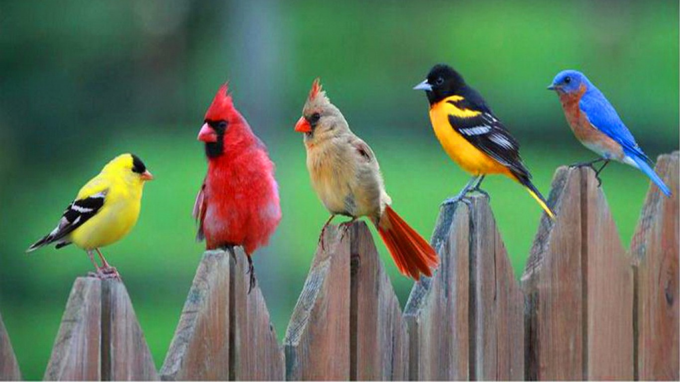 five different colored birds