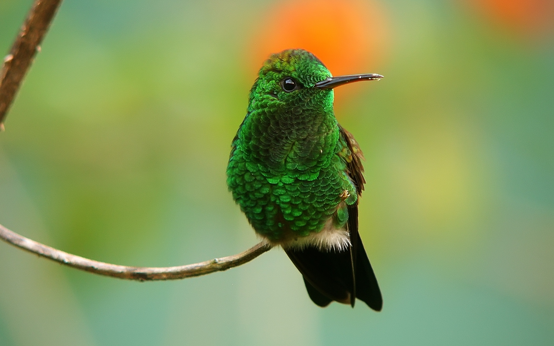 pretty picture of hummingbird