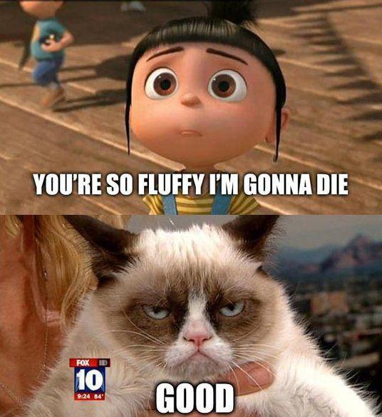 best Grumpy Cat images