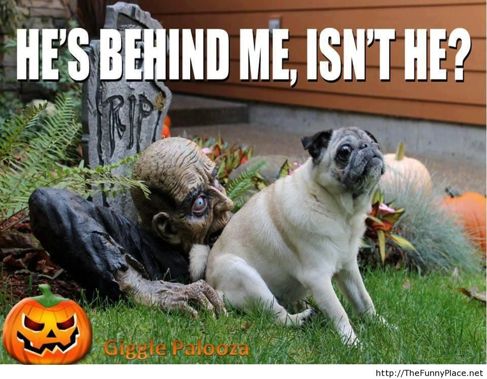 Halloween-funny-image-with-saying