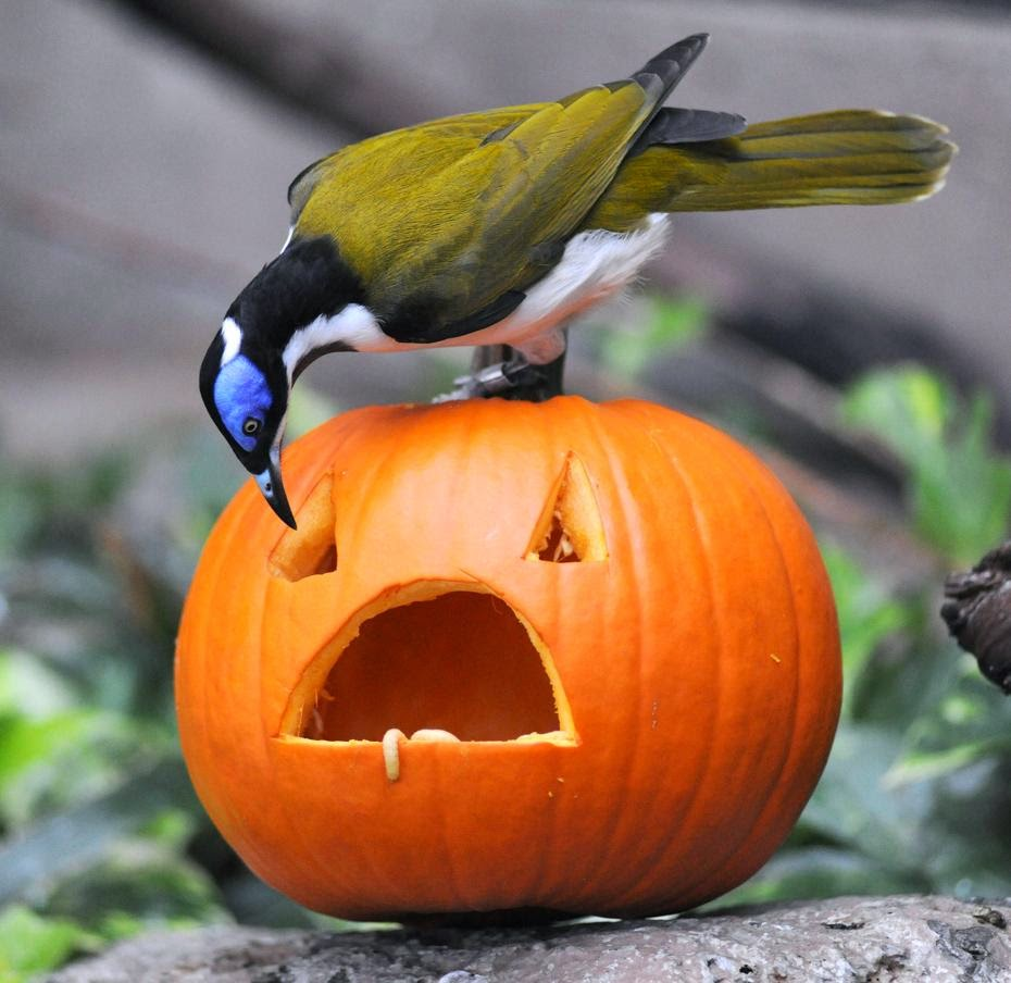funny-halloween-pumpkin-photos