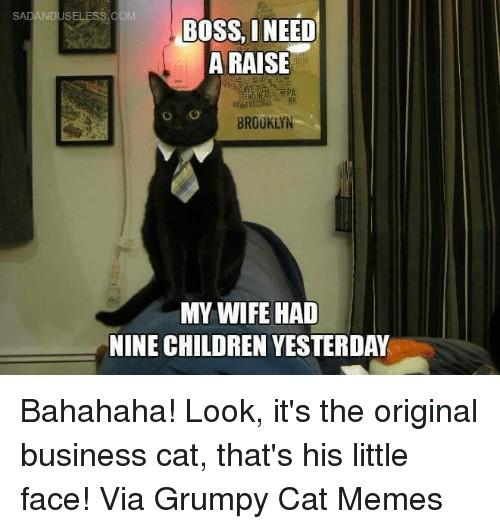 cute-funny-Cat-meme-37