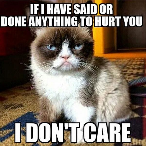 cute-funny-Cat-meme-15