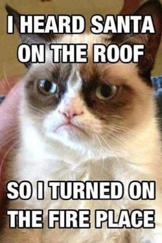 cute-funny-Cat-meme-16