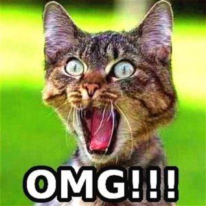 cute-funny-Cat-meme-10