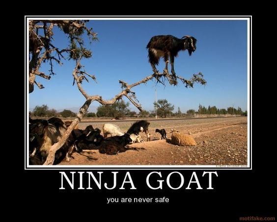 funny goat captions