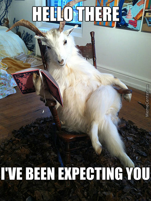 funny goat reading book caption image