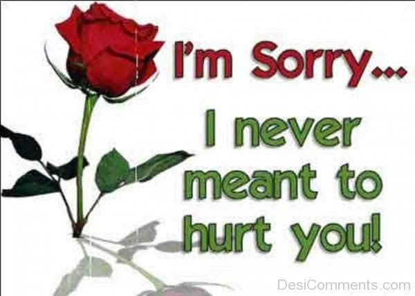 i'm sorry i never meant to hurt you