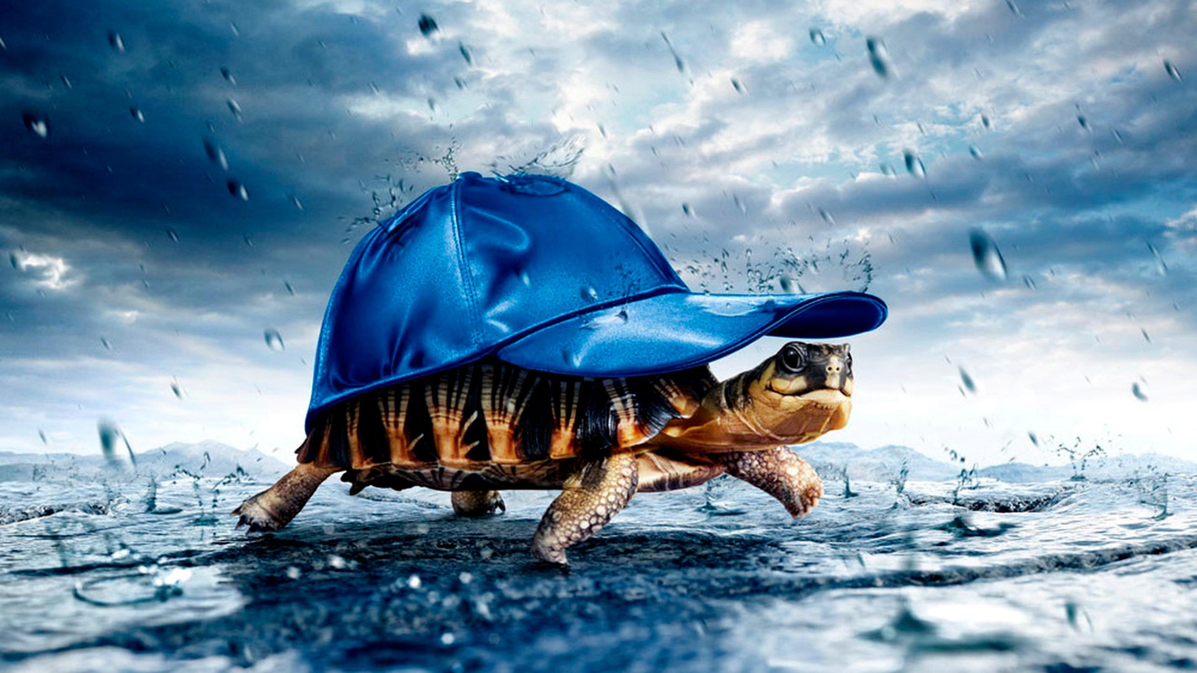 funny turtle 3d full hd wallpaper