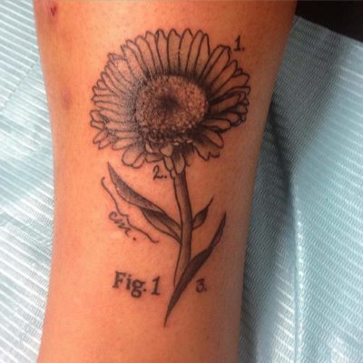 Aster Flower tattoo Diagram